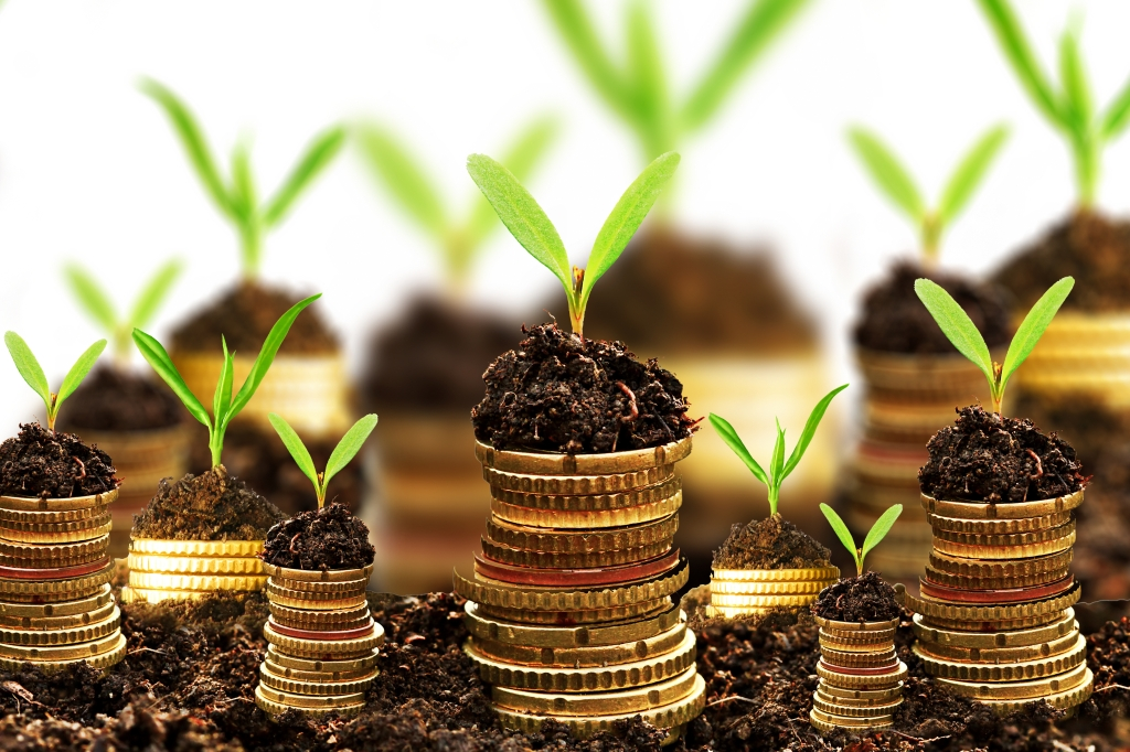 Financial Translations-Golden coins in soil with young plant -Money growth