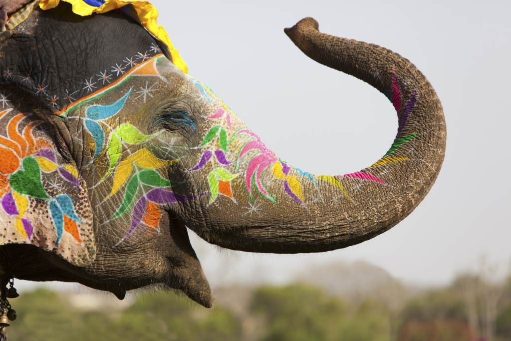 Gujarati Translation Services- Decorated elephant at the annual elephant festival in Jaipur